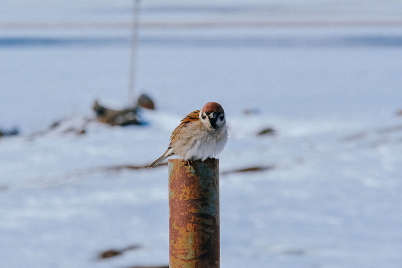 Close-up of bird perching on wood during winter