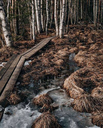 View of stream flowing through forest