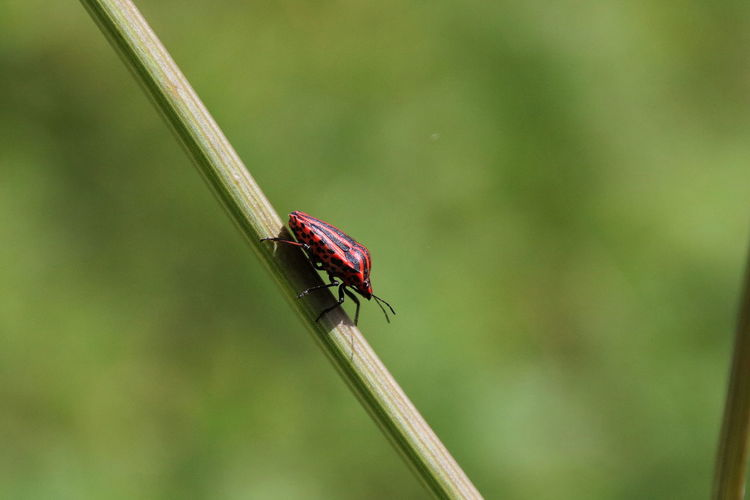 Bug Nature Walking Bug Green Background Insect Red And Black Red And Green Wildlife