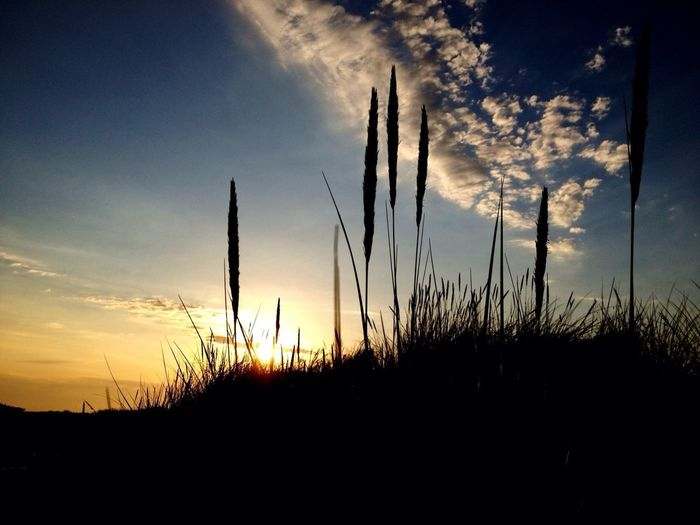 # sunset # sky # clouds # grass # silhouette