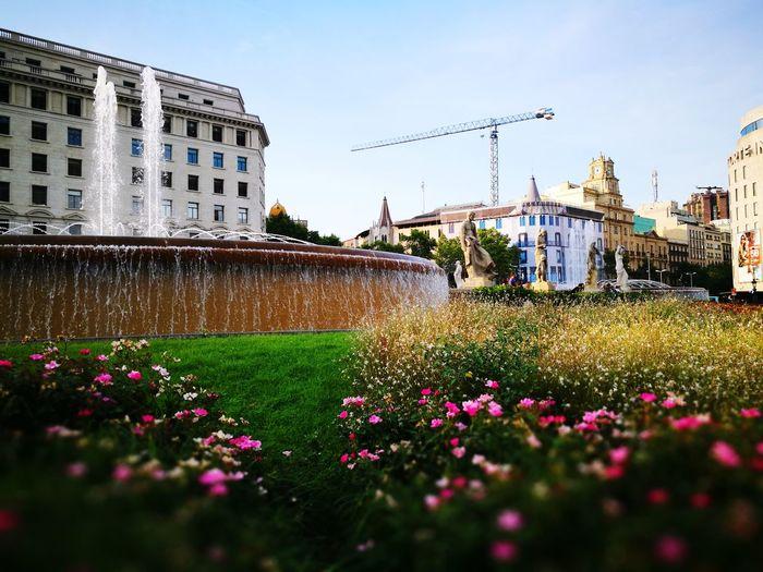 Flowers blooming in city