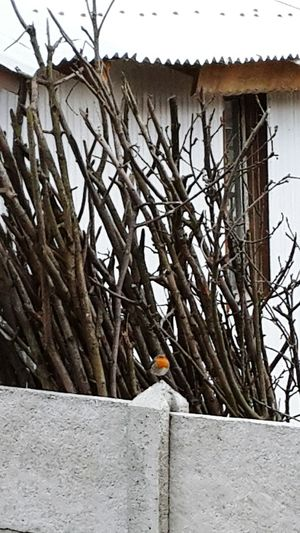 #bird #kus #sun #photography #orange  #detail Tree Branch Snow Bare Tree Winter Architecture Building Exterior Built Structure