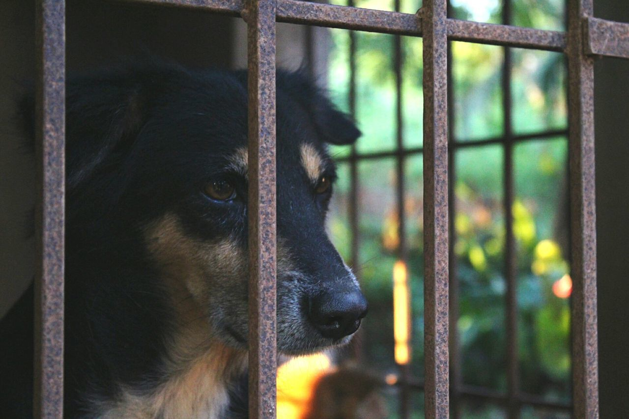 animal themes, one animal, mammal, domestic animals, close-up, focus on foreground, pets, no people, day, dog, outdoors, nature