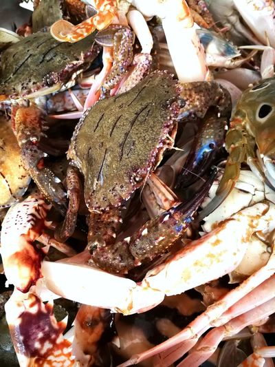 stone crabs in the market Market Crab - Seafood Crab Close-up Food And Drink Lobster Eaten Fish Market Fishes Fishing Industry Dried Fish  Shrimp