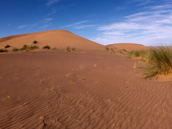 Hike through the Sahara desert in the south of Morocco Desert Sand Land Sky Scenics - Nature Climate Arid Climate Landscape Environment Sand Dune Day Beauty In Nature Tranquil Scene Nature Non-urban Scene Tranquility Outdoors Sahara Morocco Erg Chebbi Africa Dunes Semi-arid Blue Remote