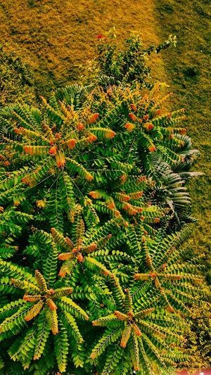 High angle view of fresh green plant