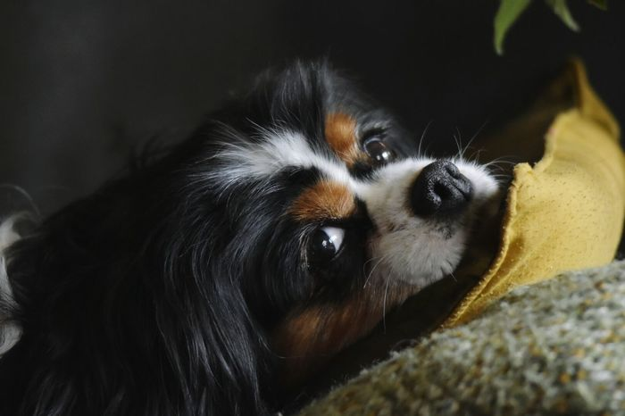 Dog Dog❤ Dog Looks At Camera Dog Looking In Your Eyes Dogs Of EyeEm Dogslife Dog Love Dogstagram Dogoftheday Doglover Dog Life Dog Of The Day DoggyDog Portrait Dog Lover Check This Out Eye4photography  Eyem Gallery Pet Portraits