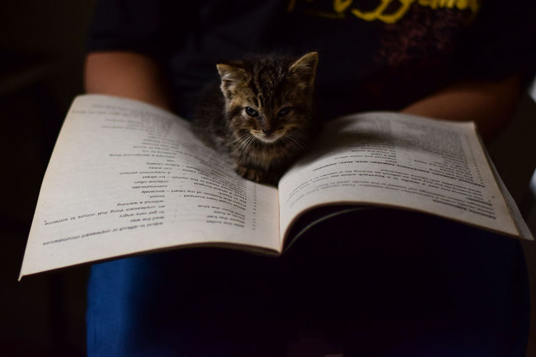 Bookworm Kitten series: 3 Cats Of EyeEm EyeEm Best Shots EyeEm Gallery Book Cat Cat Lovers Cats Domestic Domestic Animals Domestic Cat Education Feline Focus On Foreground Home Interior Indoors  Kitten Learning Mammal One Animal Paper People Pets Publication Reading Whisker