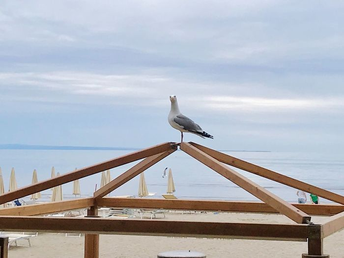 Strike a pose ! E il gabbiano obbedisce ... Bird Bird Animal Themes Sky Animal Animals In The Wild Cloud - Sky