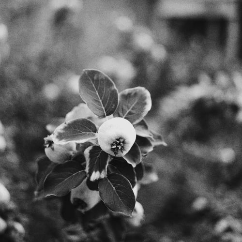 Life in Herculanum Eye4photography  Check This Out Eye4black&white  Film Italy Ercolano Herculaneum Traveling EyeEm Nature Lover EyeEm Best Shots - Black + White