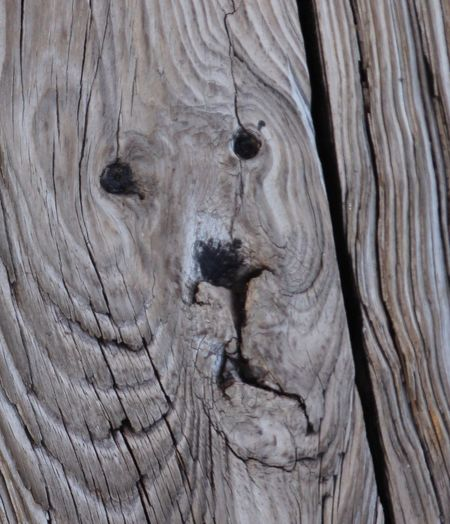 Close-up Wood - Material Can You See The Lion? Boardwalk Naturally Occurring No People