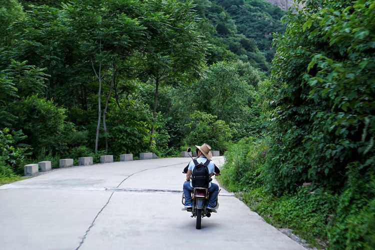 Rear View Of People On Motorcycle Amidst Trees