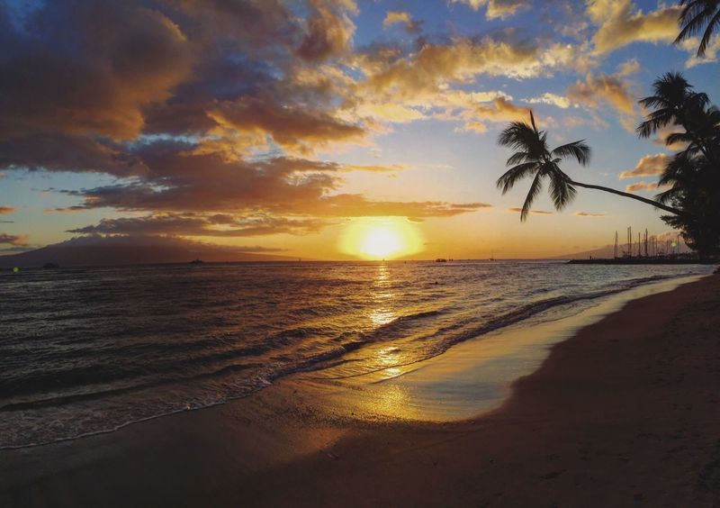 Sunset Sea Beach Palm Tree Sun Beauty In Nature EyeEm Nature Lover EyeEm Best Shots - Nature Eye4photography  Horizon Over Water Tranquil Scene Tranquility Cloud - Sky Sand Silhouette Outdoors No People Wave Tree