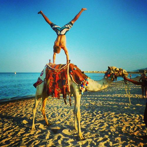 Acrobatics  Beach Breakdance Camel Clear Sky Day Domestic Animals Egypt Full Length Handstand  Horizon Over Water Horse Mammal Men Nature One Animal One Person Outdoors Sand Sea Sky Sport Water Working Animal EyeEmNewHere