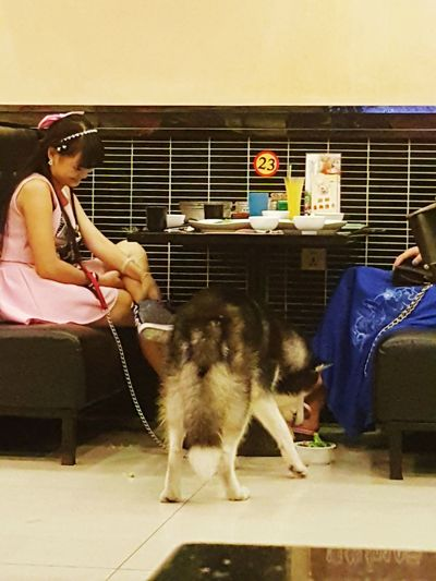 Many countries don't allow pets into restaurant but in Dongguan, China they don't bother. No muzzle worn for big dogs too. TIC (This is China) The Great Outdoors - 2016 EyeEm Awards The Street Photographer - 2016 EyeEm Awards The Photojournalist - 2016 EyeEm Awards Food And Drink Dog