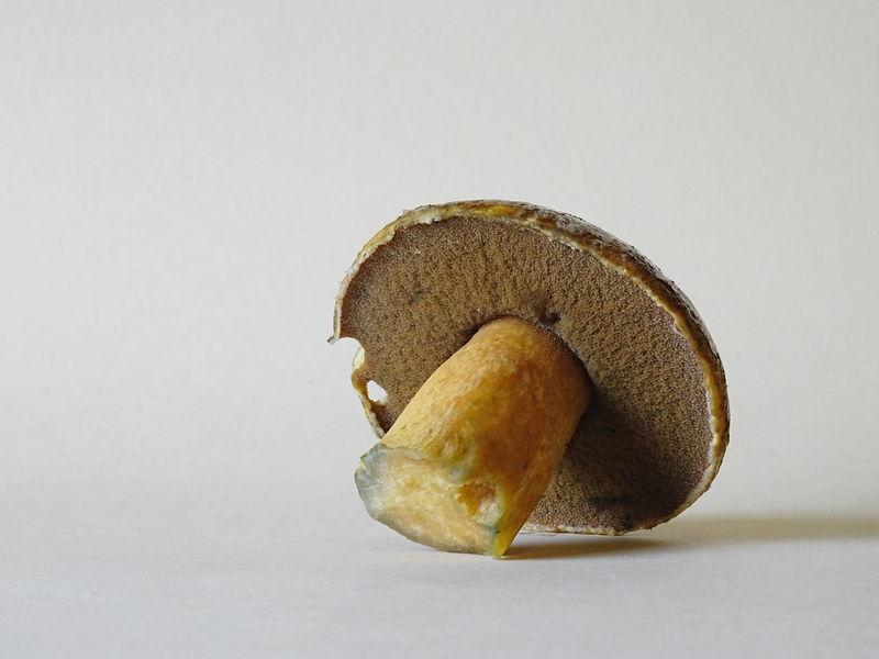 Isolated Bolet Boletos Cap Edible  Europe Forest Fresh Organic Food Tubes Wild Wild Mushroom Yellow
