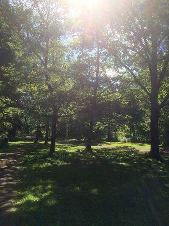 Tree Sunlight Nature Tranquility Tranquil Scene Scenics Outdoors No People Sun Grass Helsinki, Finland