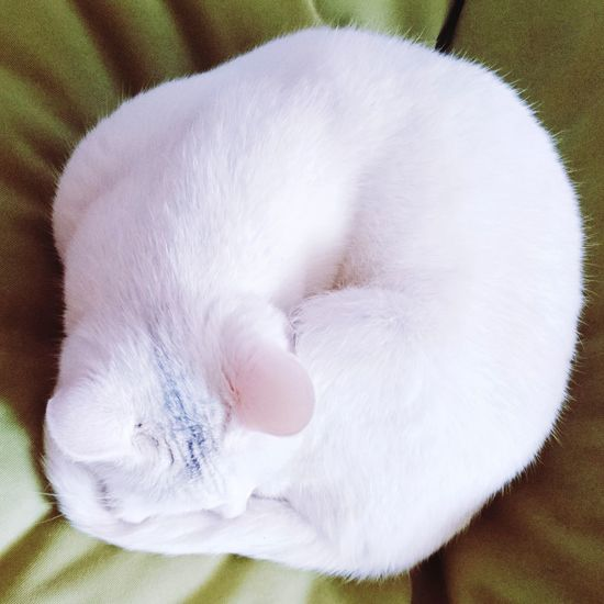 High angle view of white cat