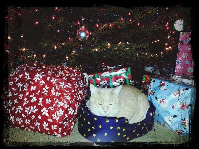 Cats Cutepets christmas