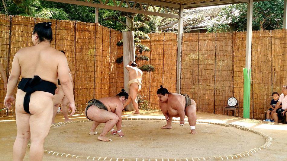 Ultimate Japan Sumo Practice Japan Nishio, Japan Nishio Sumo Wrestlers Japanese