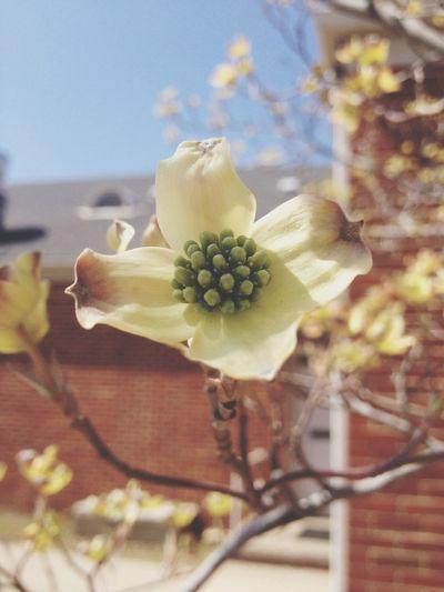 No-KXL meeting has beautiful flowers Flower Nature Beauty Activism
