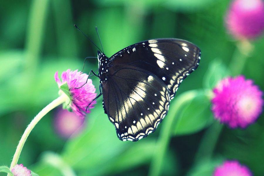Garden Wing Butterfly On The Flower Flower Nature Butterfly Butterfly - Insect Insect Macro  Macro Amarante Nature Photography Insect Garden Photography