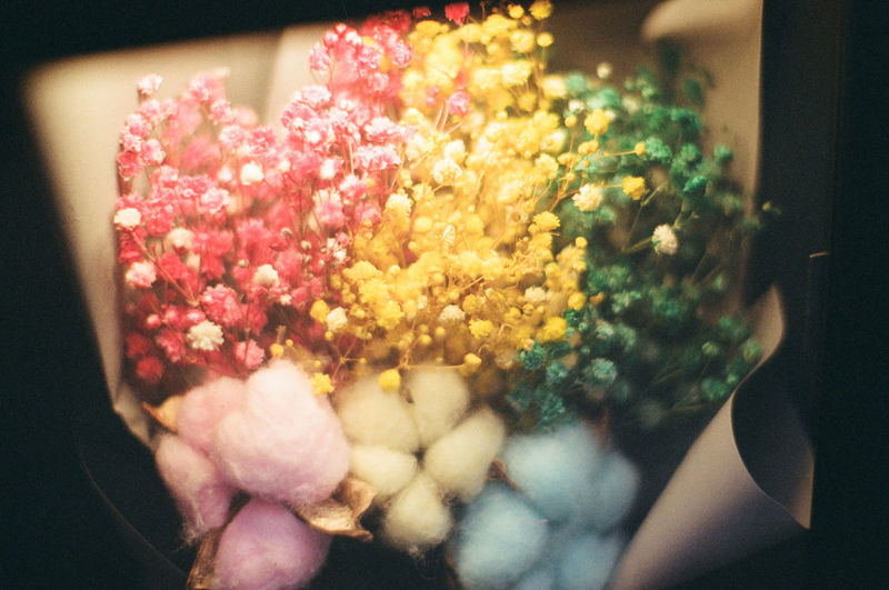 Flower Dry Flower