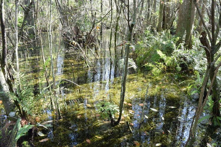 Tampa FL river