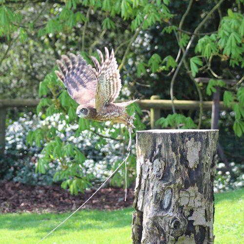 Take off Owl