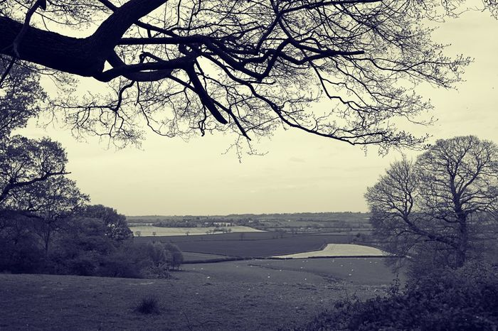 English Countryside Bare Tree Beauty In Nature Branch Day England Countryside Landscape Monochrome Photography Nature No People Outdoors Scenery Scenics Sky Tranquil Scene Tranquility Travel Destinations Tree