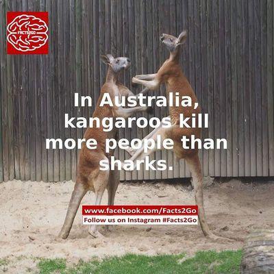 Facts2go Facts Pic Picoftheday 20likes HTers HashTags all_shots amazing bestoftheday follow follow4follow followme food girl igers instacool instadaily instafollow instago instagood instalike like like4like look love me photooftheday picoftheday kangaroo australia