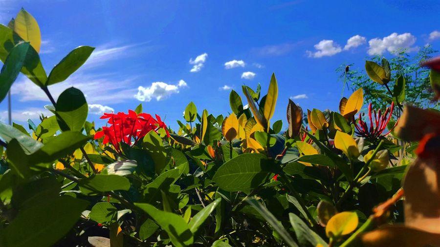 Entre ciel et nature. Haiti Nature Flowers,Plants & Garden Tropical Paradise