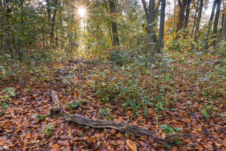 Park Herendreef, Aardenburg Autumn Tree Trunk Tranquility Landscape Leaves Sony A77ii Zeeuws Vlaanderen Zeeland  The Netherlands Park Plant Part Tree