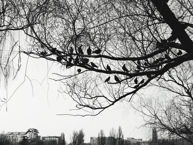 鸽子 Check This Out Hanging Out Hi! Taking Photos China Beijing Check This Out Black & White Black And White Walking Around