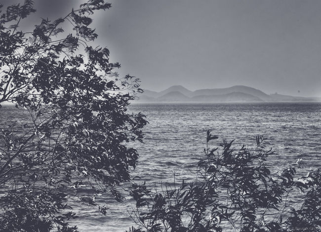 to the hazy landscape that fades away Sea Water Nature No People Tranquility Beauty In Nature Tree Outdoors Sky Horizon Over Water Scenics EyeEm Blackandwhite B/w Series B/W Photography Nature Different Perspective Faded Hazy  Hazy Day Hazy Mountains Hazy Shot Blackandwhite Photography Check This Out 😊 B/w Collection