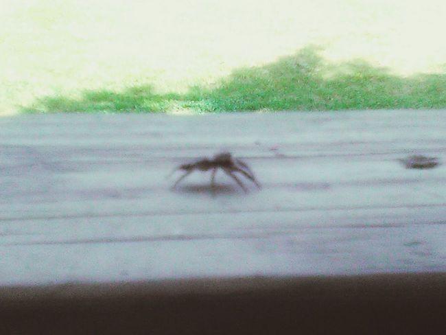 Nature EyeEm Selects EyeEmNewHere Outdoors Spider Spiderwolrd