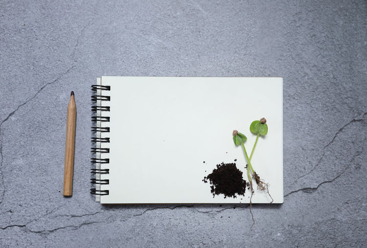 Plant No People Nature Still Life Plant Part Leaf Spiral Notebook High Angle View Table Paper Indoors  Publication Book Day Copy Space Blank Directly Above Close-up Note Pad Growth Soil Agriculture Notebook