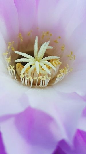Barrel head cactus flower Macro Beauty Open Edit Eye4photography