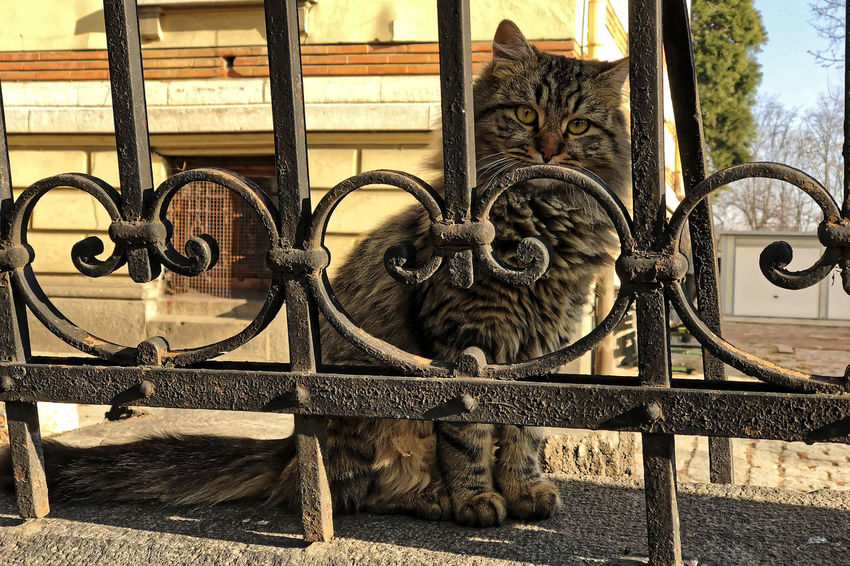 Animal Themes Close-up Day Domestic Animals Domestic Cat Feline Mammal Metal Monkey No People Outdoors Pets Stray Cat