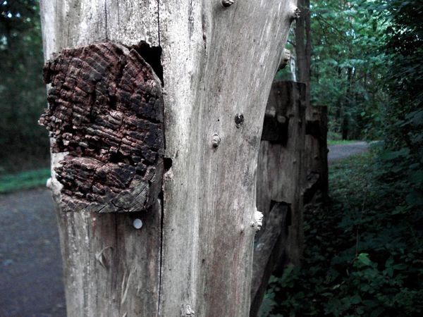 Altes Holz Geländer Holzzaun Destruction Wood - Material Zaun