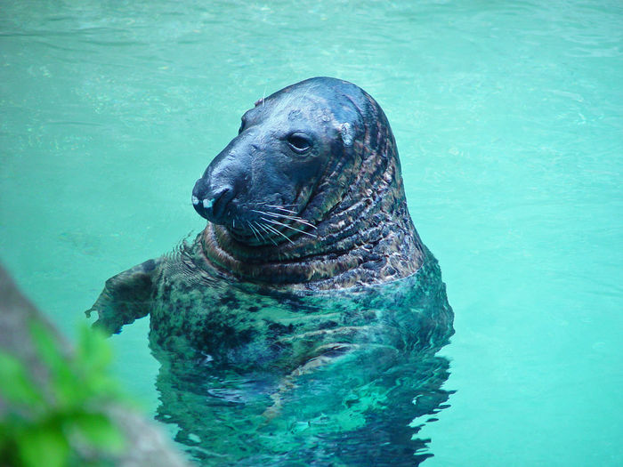 High angle view of seal swimming in pool at zoo