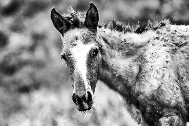 Animal Animal Themes Animals In The Wild Black And White Black And White Photography Blackandwhite Cavalo Close-up Equestrian Equine Horse Horse Life Horse Photography  Horse Riding Horses Mammal Monochrome Monochrome Photography Nature Photography Nature_collection Naturelovers One Animal Rural Rural Scene Rural Scenes