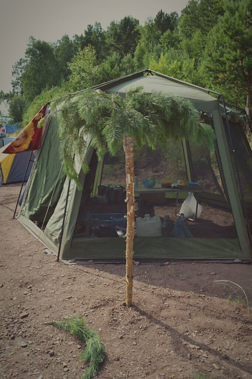 tree, camping, no people, day, shelter, tent, outdoors, nature, sky