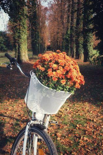 It's autumn,