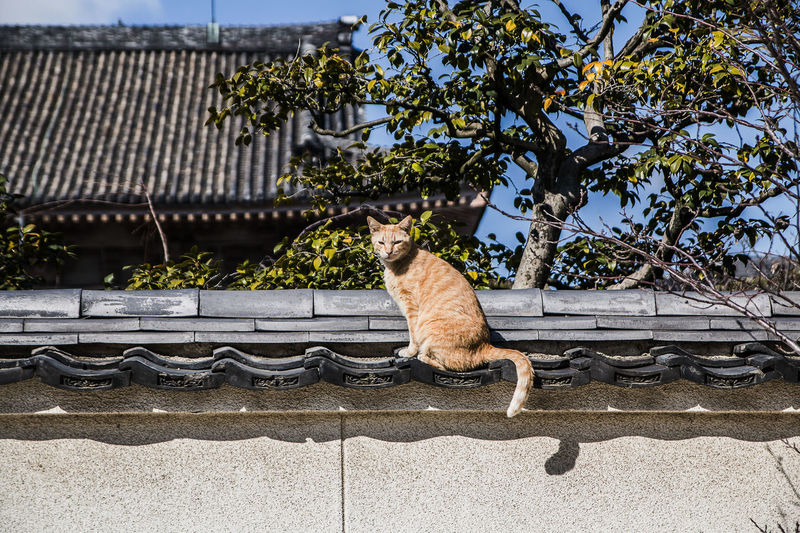 Animal Themes Cat Pets Animal Roof Sitting Nature Japan
