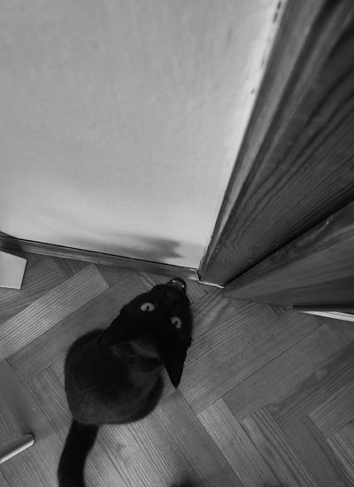 Black & White Softkitty Warmkitty 🐈 Little Ball Of Fur 🐱 Happykitty Sleepykitty  🐺 puuur..puur..puuur.. :) My Lovely Pet ♥ Mrau