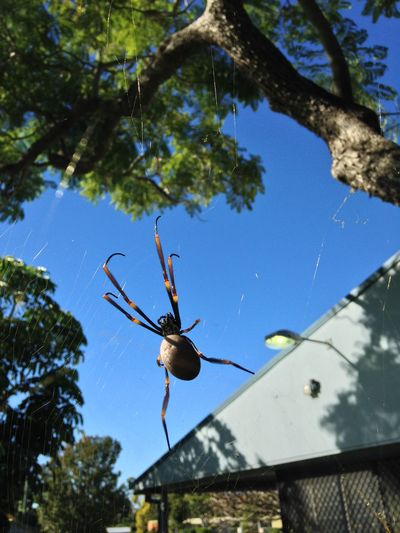 Spider Bugs IPhoneography Blue Sky