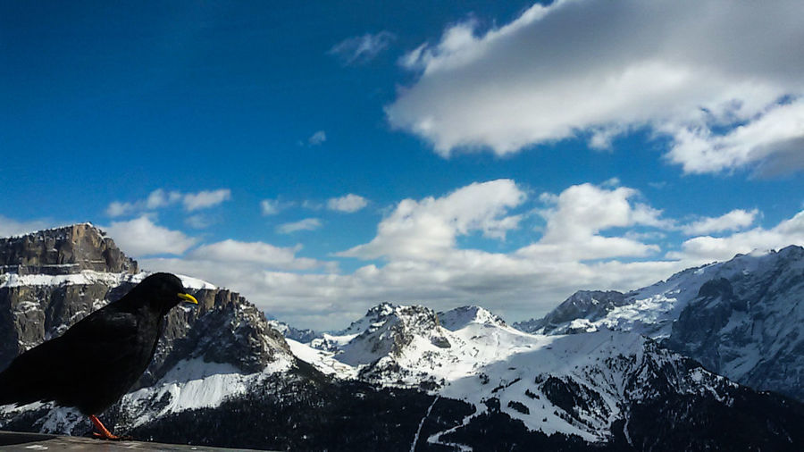 Holiday At Ski Birdwatching Mountain White Cloud Blue Sky Snow On The Top Of The Mountain Beauty In Nature Landscape Edit Lightroom in Dolomites, Val Gardena in Italy
