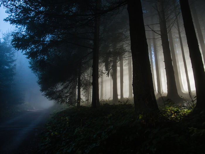 Sunlight Through Trees In Forest