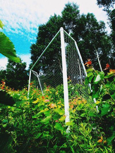 Русский футбол футбол Kost27 Mylife City FarEasr_Russia дальнийвосток Хабаровск Россия Russian Football Tree Water Sky Plant Green Color